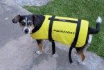 Chaleco para Perro Aquafloat